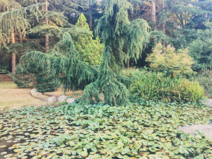 llac petit-El Viver d'Argentona - lloguer d'espais Exteriors per a cinema fotografia i esdeveniments